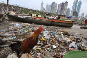 """(((ACOMPAÑA CRÓNICA : PANAMA - DESARROLLO))) PAN02. CIUDAD DE PANAMA (PANAMA), 13/06/08.- Un gallo camina por la playa del barrio de """"Boca La Caja"""" hoy, 13 de junio de 2008, en Ciudad de Panamá. El boom económico que experimenta Panamá ha convertido su capital en """"un caos urbano"""" cuya promoción es """"una estafa"""" y un """"atentado contra el medioambiente"""", según denunciaron a Efe profesionales de la construcción y representantes políticos y de organizaciones ciudadanas. EFE/Alejandro Bolívar"""